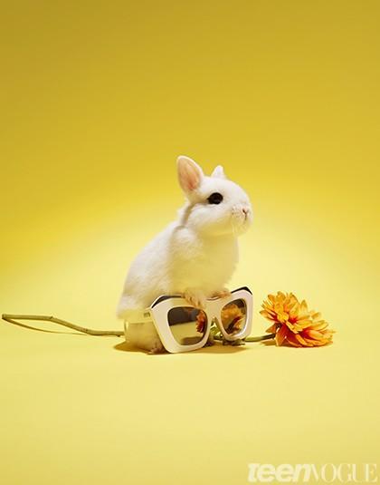 bunnies with sunnies